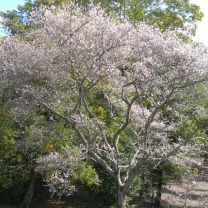 紅葉と桜花3