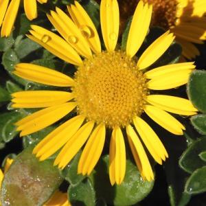 初夏の花5
