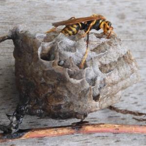 畑のハーブとハチの巣