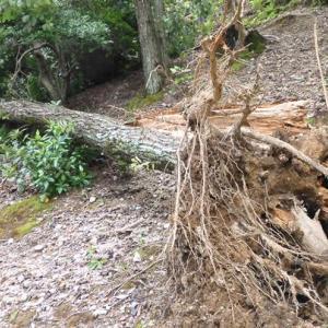 強風による公園の樹木の被害