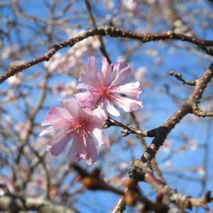 紅葉と桜花4
