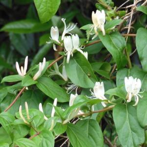 雑木林の初夏の花