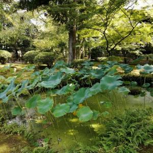 「広隆寺」から「龍谷ミュージアム」へ仏教の道を訪ねて