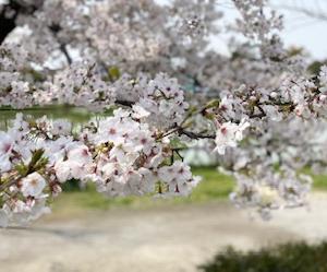 心も体ものびのびと、ヨガで春をあじわう