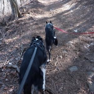 三湖台から五湖台へ犬連れハイキング