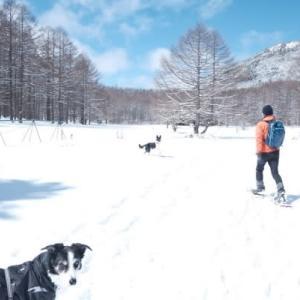 スノーシューで雪遊び