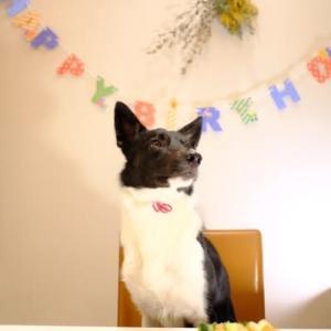 端午くん、1歳のお誕生日おめでとう!!