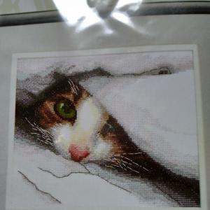 猫ちゃんのキット、買っちゃいました(⌒∇⌒)