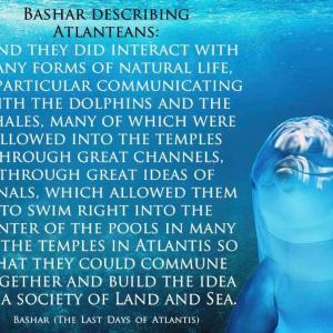 バシャール:アトランティス人は イルカやクジラたちと一緒に集う機会を持っていました