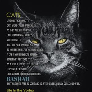 バシャール:猫は こちらの次元とあちらの次元を 自由に(意識の面で)行ったり来たりしています