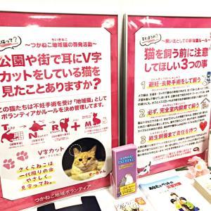 9月の譲渡会&地域猫啓発パネル展のご報告