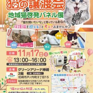 """""""11/17『猫の譲渡会』&地域猫パネル展in尼崎"""""""