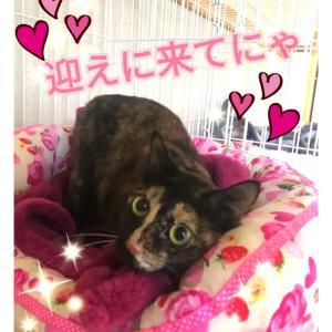 """""""尼崎市愛護センター便り~子猫います~"""""""