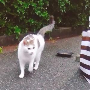 地域猫から家猫になった幸運なコアラちゃん