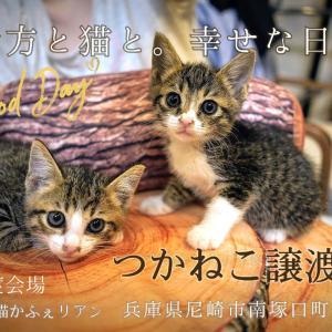 つかねこ譲渡会in尼崎(保護猫かふぇリアン)8/29(土)13:00~