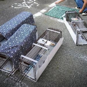 O町チームで野良猫一斉TNR捕獲!
