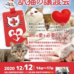 あなたが繋ぐ、保護猫の物語ー。『訳猫の譲渡会』(わけねこ譲渡会)