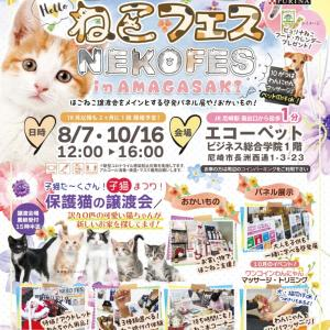 ◆開催間近★8/7ねこフェス inあまがさき◆子猫まつり♪保護ねこ譲渡!