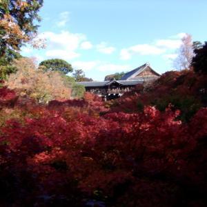 京都の寺院・紅葉と庭園、日本だけの文化なの?その2(33回)