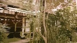 古都・北鎌倉で非日常の時を過ごす 고도・북가마쿠라(北鎌倉)에서 비일상의 시간을 보낸다(18回)