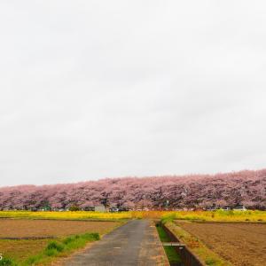 Episode : 540 / Gongendo Sakura Tsutsumi - 03