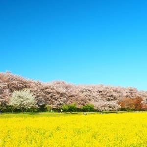 Episode : 542 / Gongendo Sakura Tsutsumi - 05