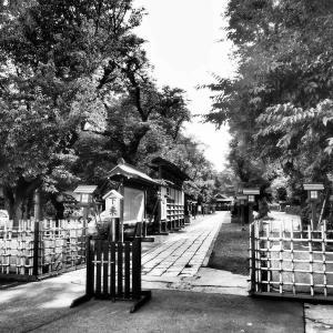 Episode : 621 / Washinomiya Shrine - 03