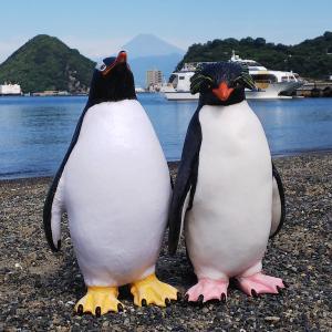 Vol.1901~キャプテン(ジェンツーペンギン)&ロッキー(イワトビペンギン)@三津海水浴場