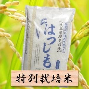 申込完了☆岐阜の超美味しいお米「はつしも」11kg! ふるさと納税 返礼品