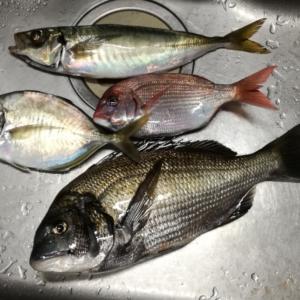 10月27日の釣り 船釣り