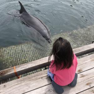 ドルフィンファーム オートキャンプ場を詳しく紹介します~イルカと遊べる伯方島のキャンプ場~