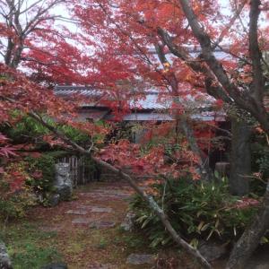 紅葉の妙心寺