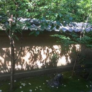 沙羅双樹の花寺へ