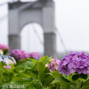 戸川公園の紫陽花