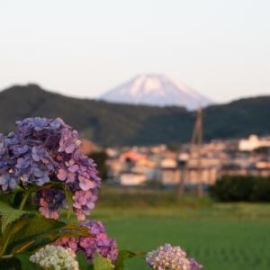 紫陽花と富士山