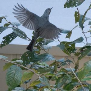 天気に恵まれないのでベランダから鳥をさがす・・