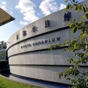 京都水族館「夜のすいぞくかん」開催日はいつ?夜のイルカショーやアザラシの寝顔を見てきました♪