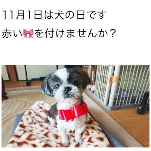 """""""11月1日は犬の日です"""""""