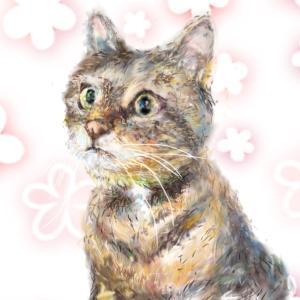 ねこ ネコ CATS