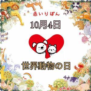 世界動物日 10.4には赤いりぼんをつけましょう
