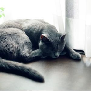 """""""あっとの命日""""  心に深く残る優雅な姿の猫さん"""