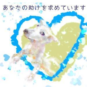 松本市繁殖事業者廃業による保護犬 208頭 受け入れ