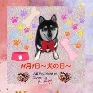 姫菜ちゃんから癒しカードいただました