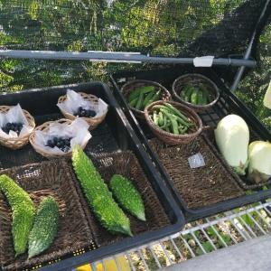 新鮮野菜無人販売
