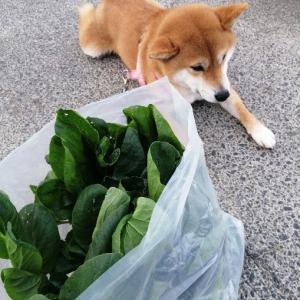 小松菜いっぱい;