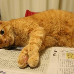 新聞紙と猫