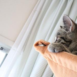 猫テレビを見る猫