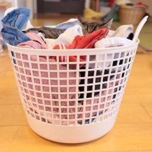 今日の洗濯物