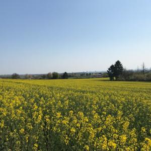 ☆今年は異常に寒いドイツの春