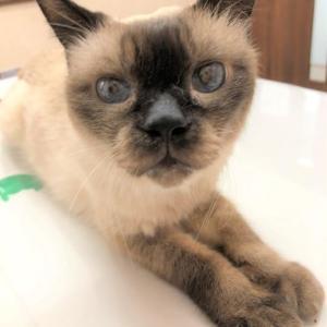 【猫の喉の腫瘍】ばるのその後(投薬・栄養面)